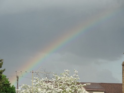 rainbow photo